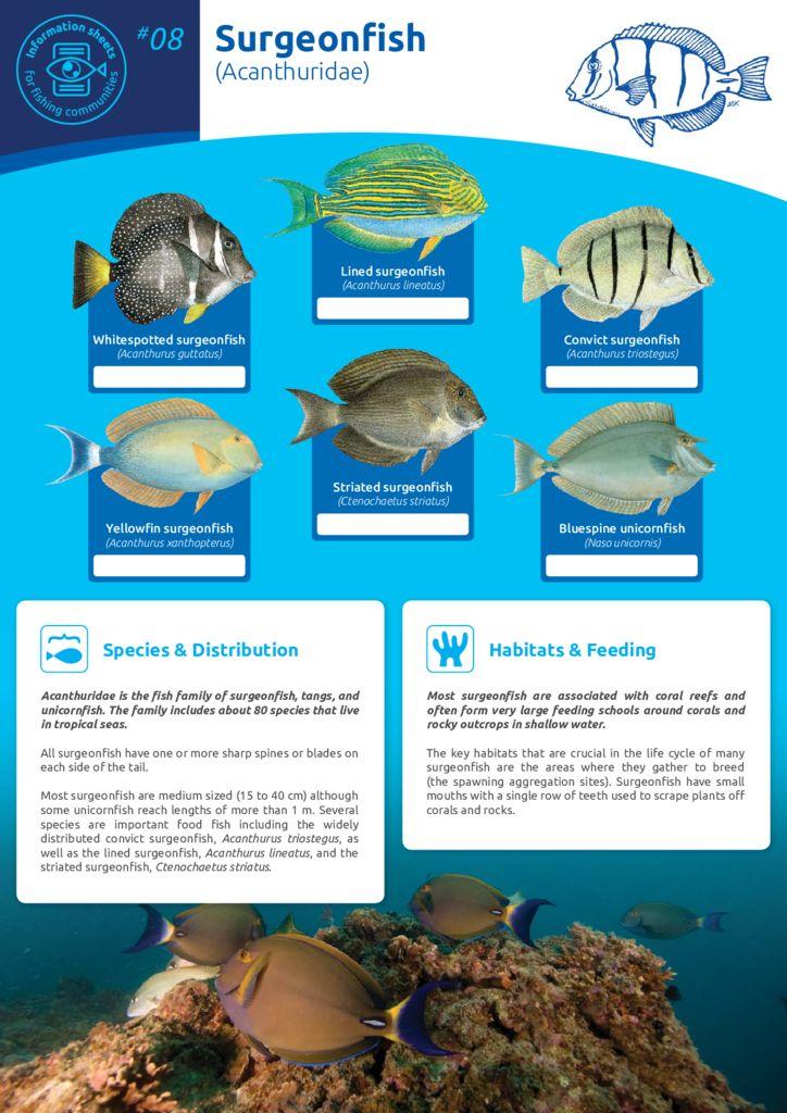 thumbnail of Anon_11_ISFC_08_Surgeonfish