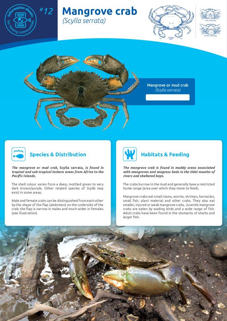 thumbnail of Anon_11_ISFC_12_MangroveCrab