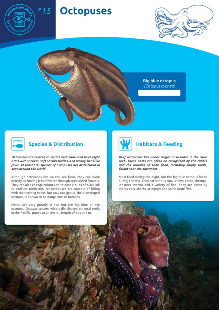 thumbnail of Anon_11_ISFC_15_Octopuses
