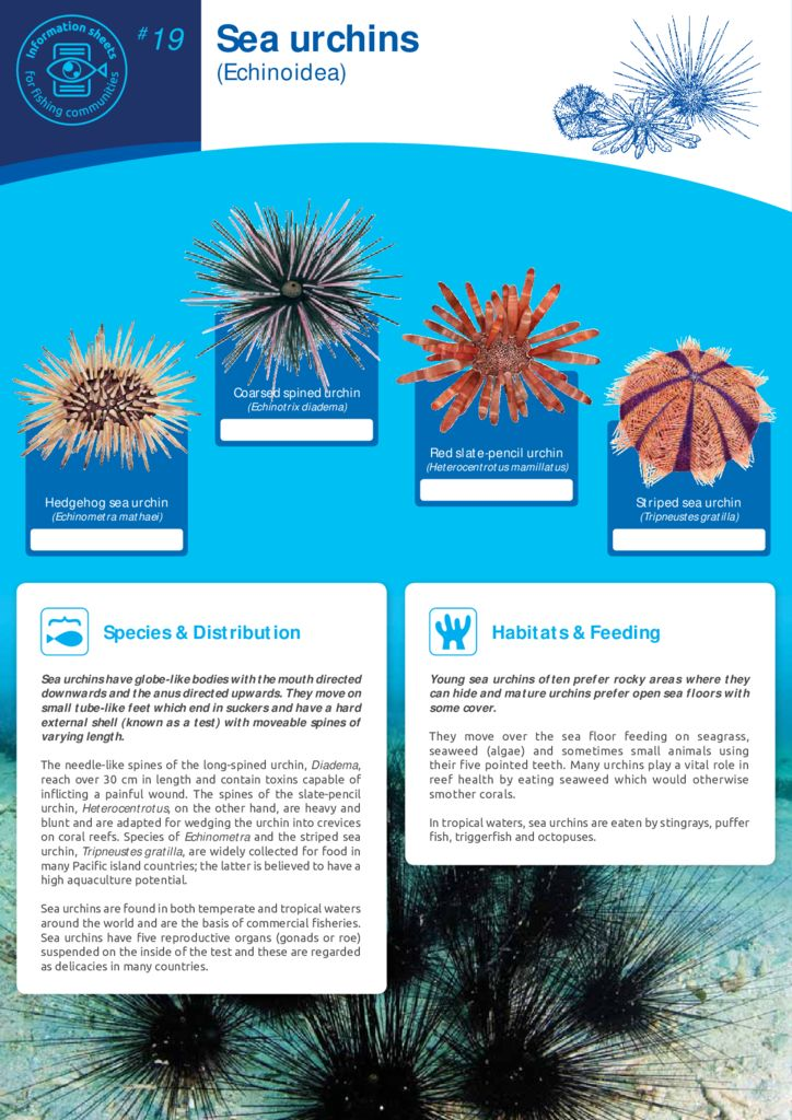 thumbnail of Anon_12_ISFC_19_Urchins