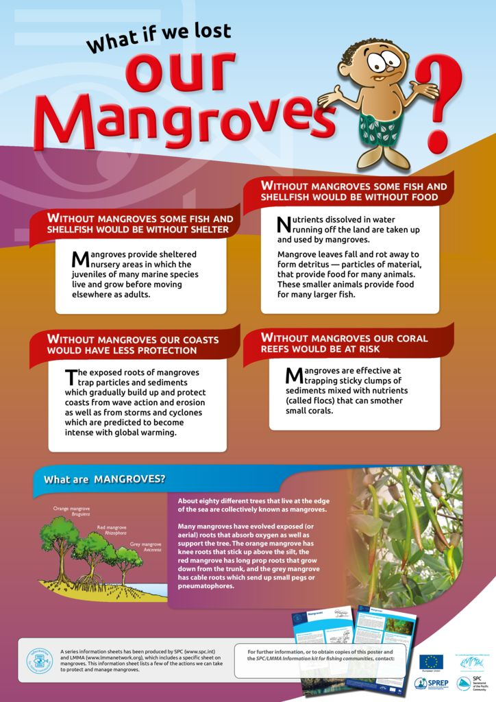 thumbnail of Anon_13_ISFC_00f_Poster_Mangroves