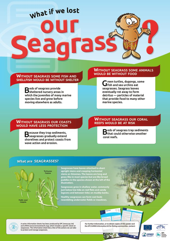 thumbnail of Anon_13_ISFC_00g_Poster_Seagrass